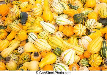 Pile of pumpkins background