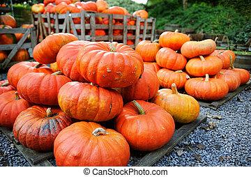 Pile of pumpkins for sale. Shallow DOF