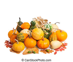 Pile of pumpkins with autumn foliage isolated on white background