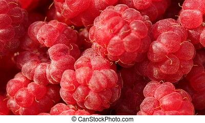 Pile of raspberries in closeup