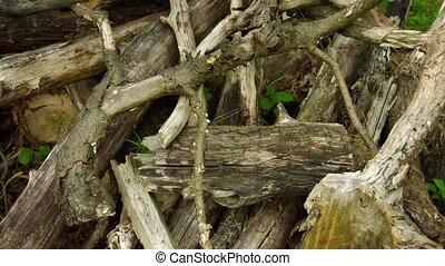 A pile of rotten wood in an oak forest. Video 4k with natural sound