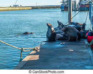 Pile Of Sea Lions 5
