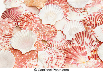 Pile of sea shells for background