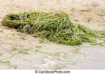 pile of seaweed on the shore river