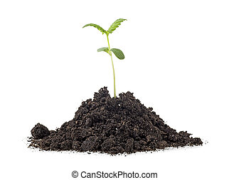 Pile of soil with cannabis sprout isolated on white background