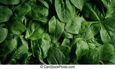 Pile Of Spinach Vegetable Rotating - Overhead shot of fresh...