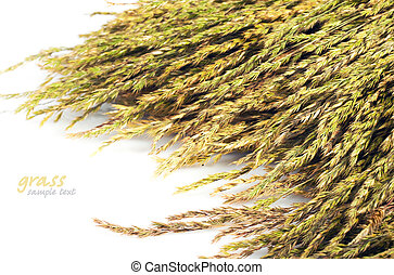 straw  - pile of straw on a white background