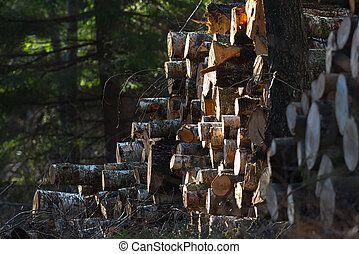 Pile of timber in the woods at a clearcut during spring