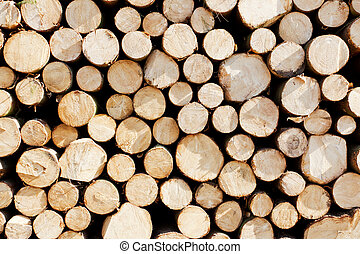 Pile of tree trunks - Big pile of cut tree trunks in the sun