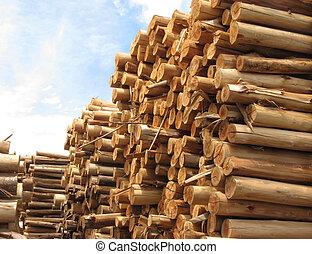 Pile of trunks for paper - Stack of trunks of Eucalyptus...