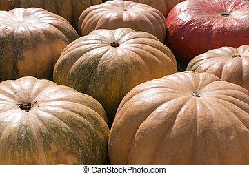 pile of various pumpkins at harvest festival. background, vegetables.