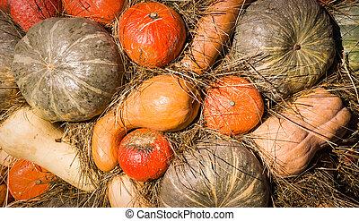 pile of various pumpkins at thanksgiving harvest festival. background, vegetables.