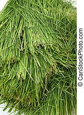 Pile of Wheatgrass