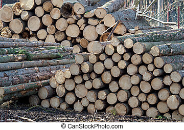 Pile of wood.