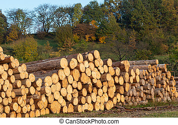 Pile of wood. A view of huge stacks of logs.
