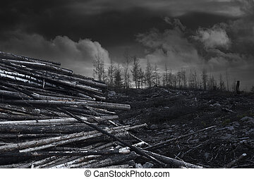 Pile of wood after forest fire area