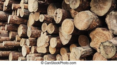 Pile of wood logs .Forest logging site. felled tree trunks....