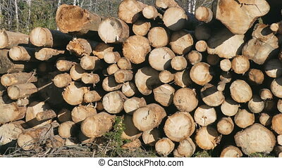 Pile of wood logs storage for industry - logging for further...