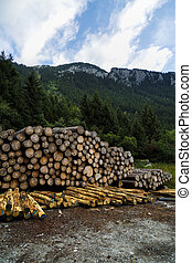 pile of wood near a forest