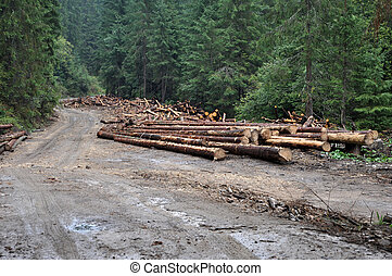Pile of wood near forest road