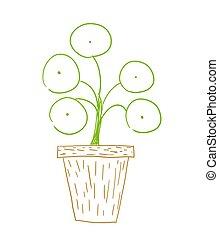 Pilea money plant - Pilea peperomioides also known as money...