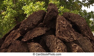 Piled heap of cow dung cakes, Varanasi, India - Extreme...