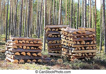 piles, bois brûler, trois, forêt