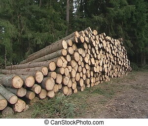 Piles of cut logs in forest.