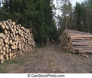 Piles of cut logs in the forest.