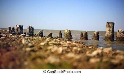 Piles of old wooden bridge on sea coast.
