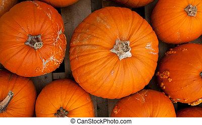 Piles of pumpkins background