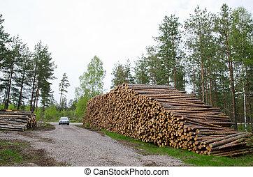 pilhas, madeira