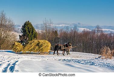 traffic in mountainous rural area in winter - Pilipets,...