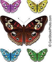 pillangók, többszínű
