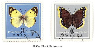pillangók, -, topog, gyűjtés