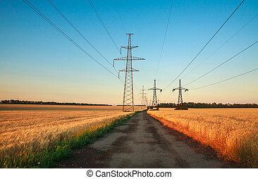 Pillars of line power electricity in wheat fields on blue sky