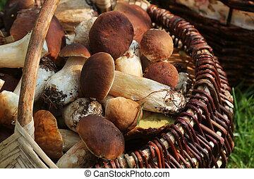 pilze, voll, oberseite, steinpilze, forest., korb, frisch, ...