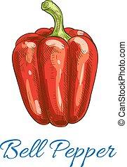 pimenta, sino, isolado, vetorial, esboço, vegetal, ícone