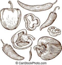 pimentas, muitos, ilustração