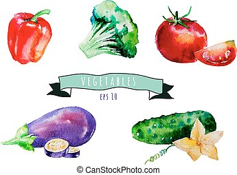 pimienta, eggpl, set., vegetales, acuarela, tomate, vector, ...