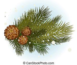 pin, branche, cône
