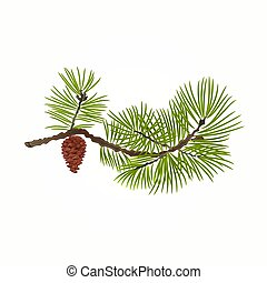 pin, branche, cône, vecteur
