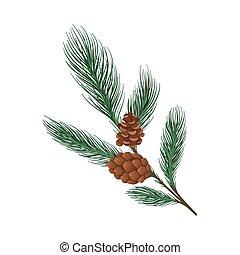 pin, branche, cone., mince, vecteur, illustration.