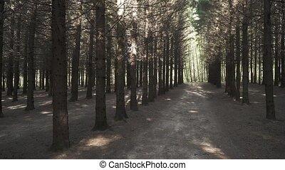 pin, branches sèches, parc