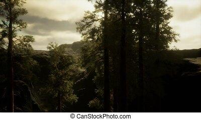 pin, brouillard, arbres, accidenté, flanc montagne, venir, ...