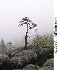 pin, dans, les, brouillard