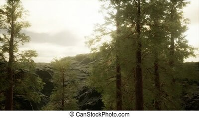pin, flanc montagne, arbres, brouillard, orage, venir, ...