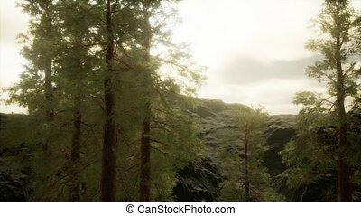 pin, flanc montagne, brouillard, orage, arbres, accidenté, ...