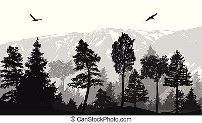 pin, fond, paysage, forêt