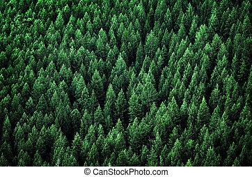 pin, montagnes, arbres, désert, forêt
